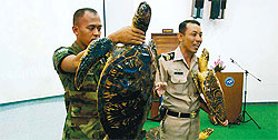 A stuffed turtle (left) which met his demise after ingesting plastic bags.