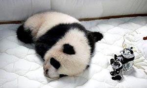 Lin Ping panda name in Thailand