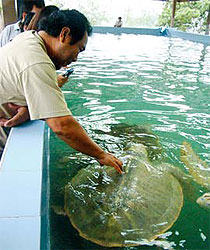 You're allowed to touch the larger turtles.