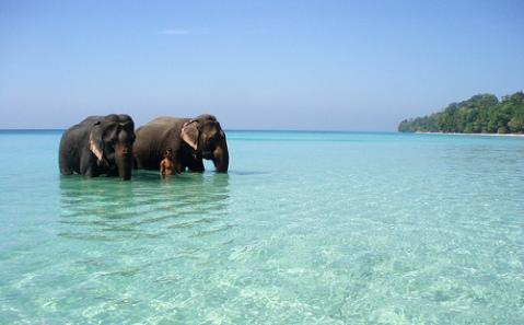 2 elephants bathing, crystal clear sea, white sand, wild jungle